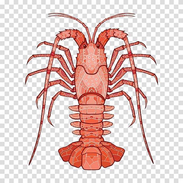 Crayfish illustration Illustration, Delicious lobster tail.