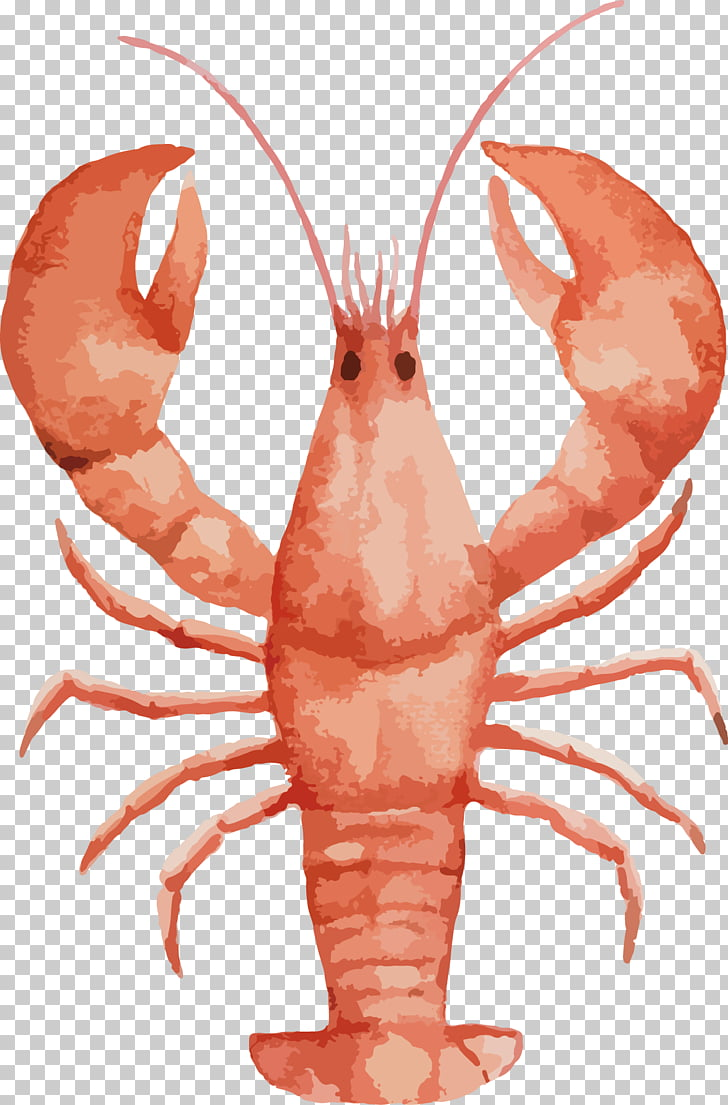 Lobster Watercolor painting Seafood Drawing, Painted large.