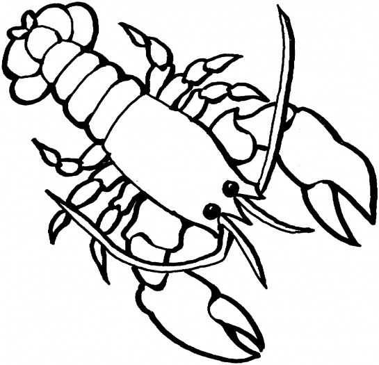 Free Lobster Drawings, Download Free Clip Art, Free Clip Art.