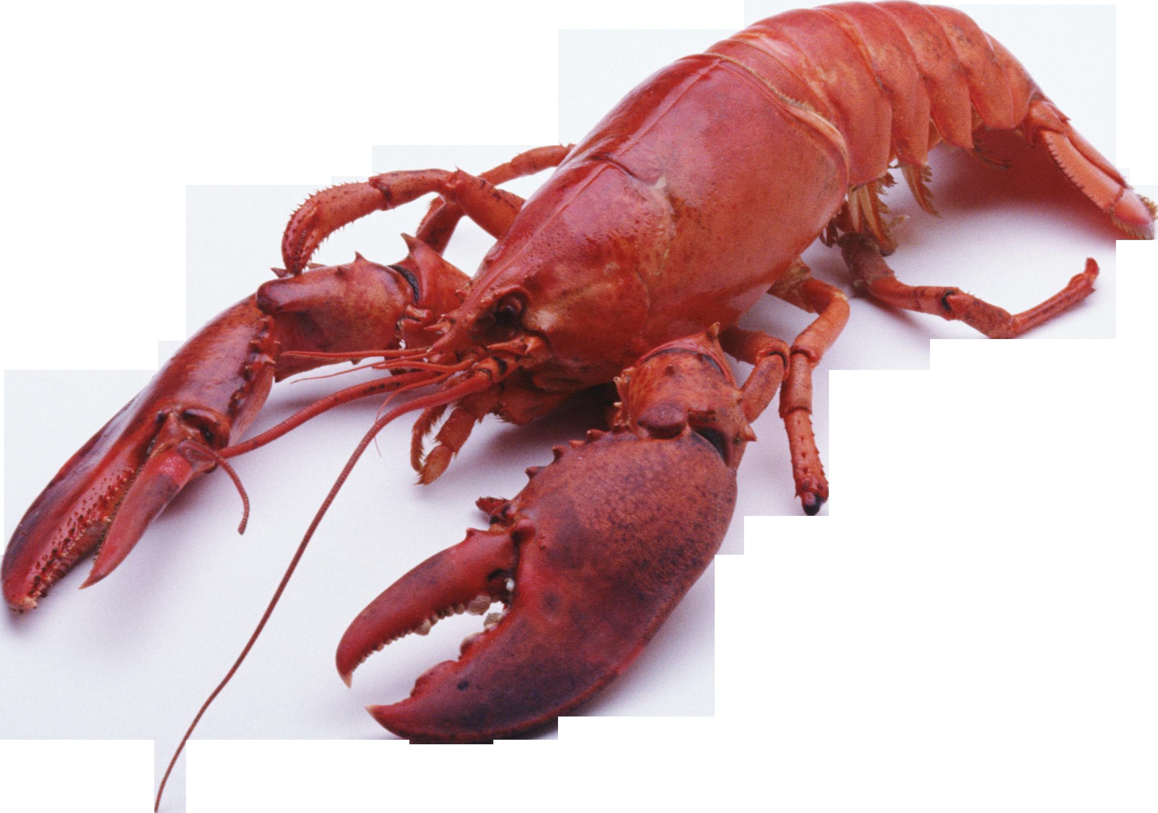 Lobster PNG images.