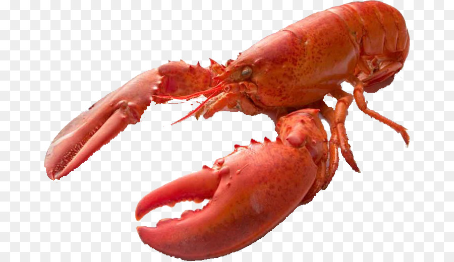 Chitosan Dietary Supplement Lobster Shel #47243.