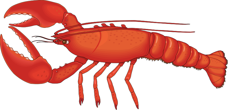 Free lobster s animated lobsters clipart.