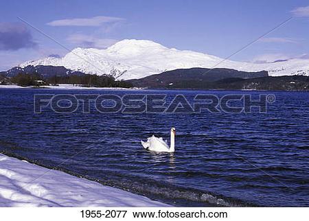 Picture of Loch Lomond Ben Lomond Swan 1955.