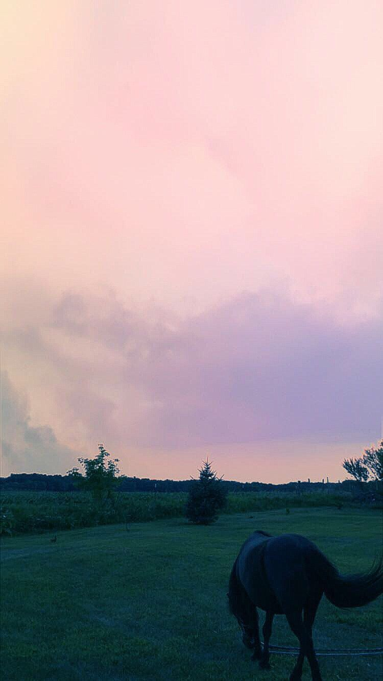lockscreen #wallpaper #horse #sky #sunset.