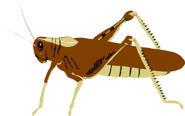 Locust clipart 20 free Cliparts | Download images on ...
