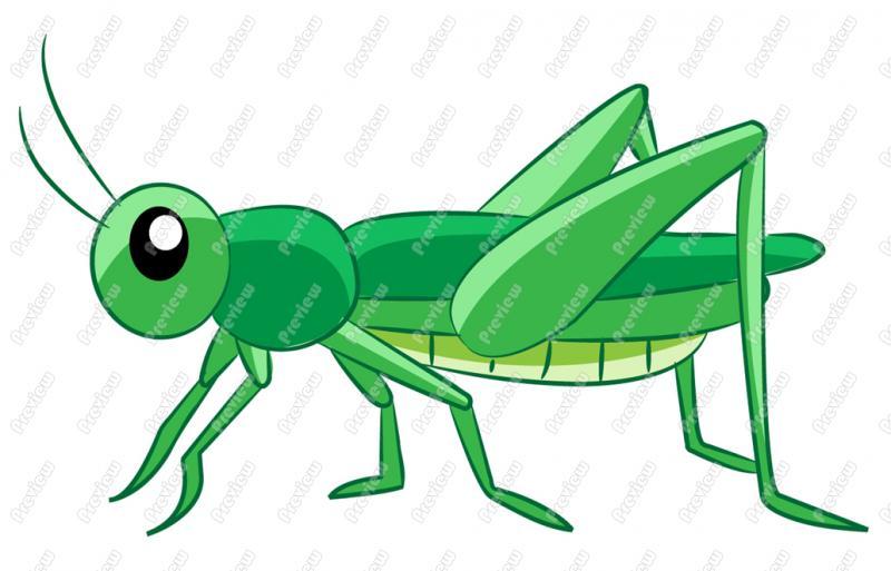 Clipart locust.