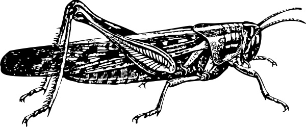 Locust clip art Free vector in Open office drawing svg ( .svg.