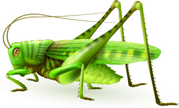 Locust free vector download (9 Free vector) for commercial use.