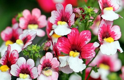 Flower, Market.