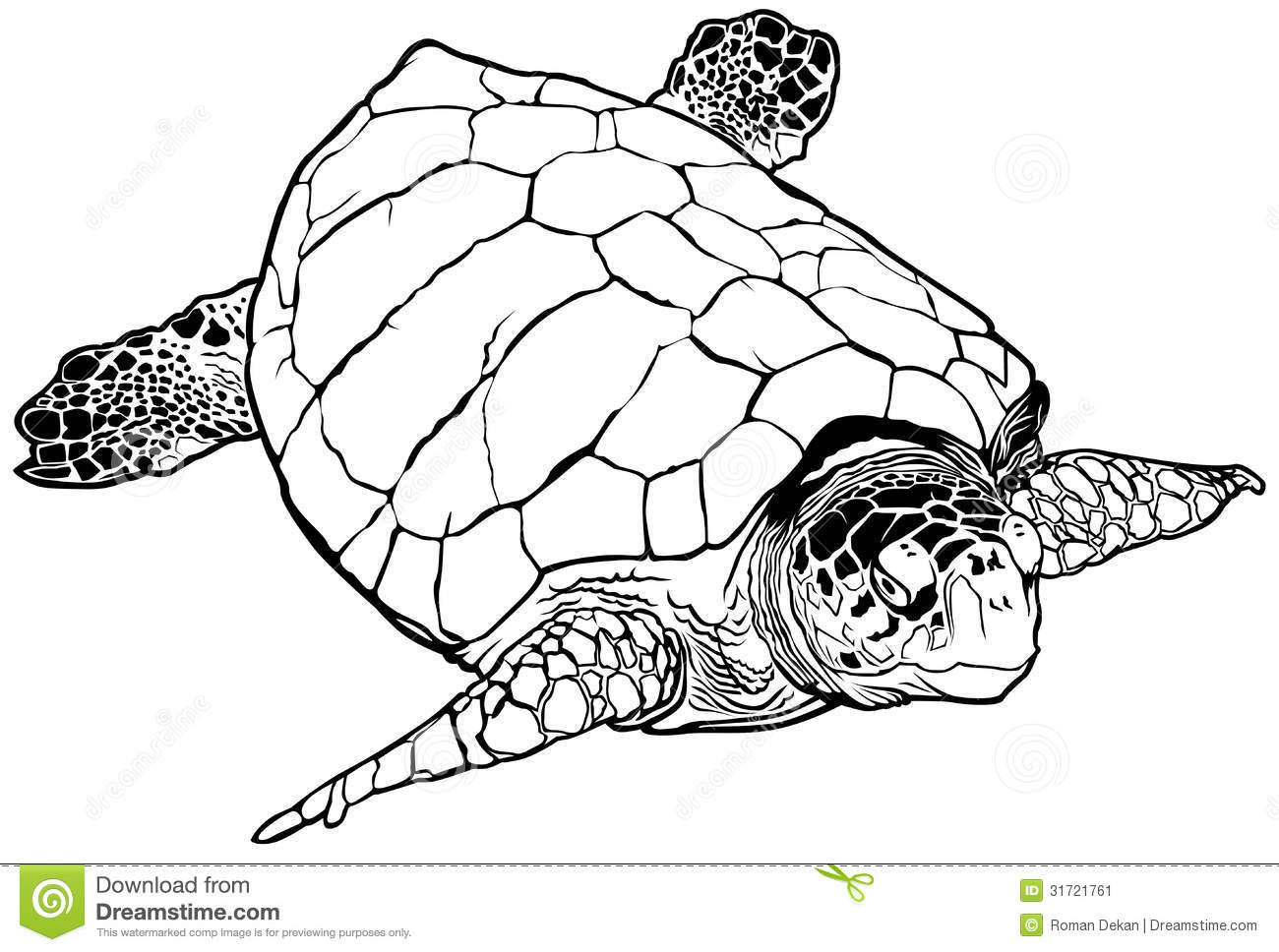 Showing post & media for Loggerhead turtle cartoon.