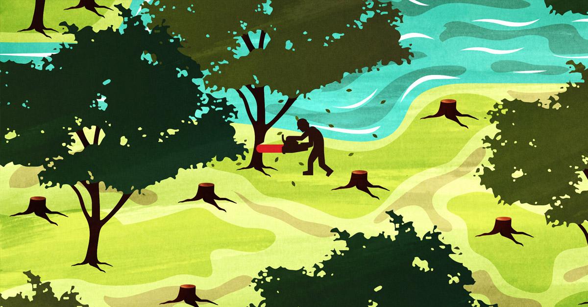 Combating Illegal Logging #Deforestation.