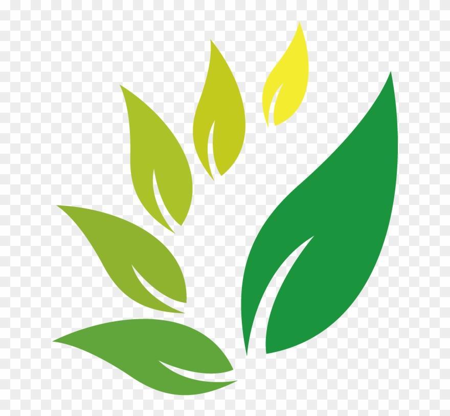 Jamu Herb Indian Jujube Herbal Logo Clipart.