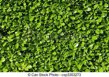 Stock Fotos von Büsche, lorbeer, Hecke, grün, Blätter.