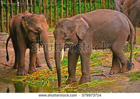 Borneo Wildlife Stock Photos, Royalty.