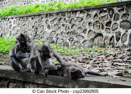 Stock Illustration of Lombok, Indonesia, , animal, monkey.