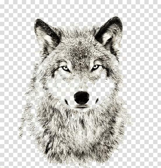 Brown wolf art, Gray wolf Sheep Sleep Lone wolf Puppy, wolf.