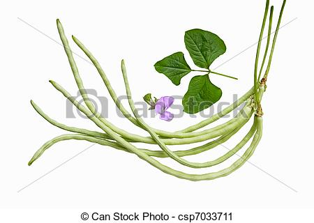 Stock Photography of Long Bean.