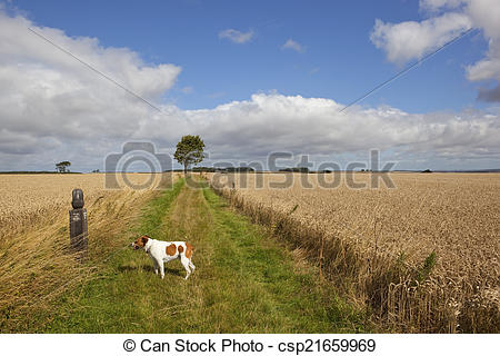 Stock Image of tired dog on a long distance footpath.