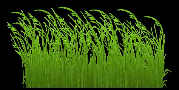 Long grass clipart.