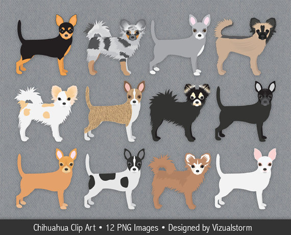 Chihuahua Clipart, Hand Drawn Chihuahua Dog Illustrations, Short.