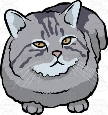 British semi long hair cat Cartoon Clipart.