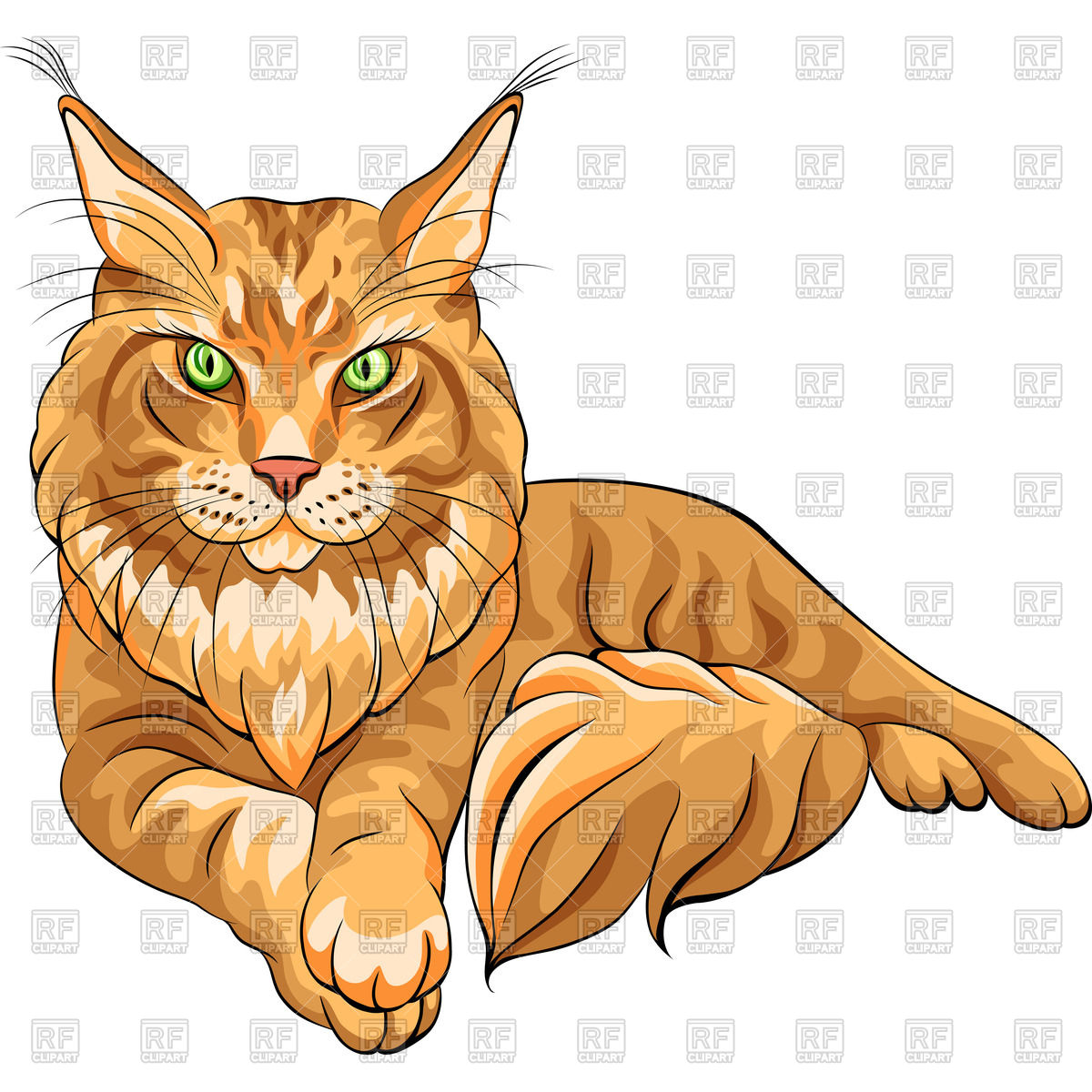 Sketch of serious red fluffy Maine Coon (American Longhair) cat.