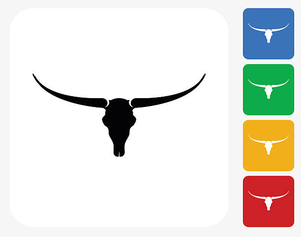 Best Texas Longhorn Cattle Illustrations, Royalty.