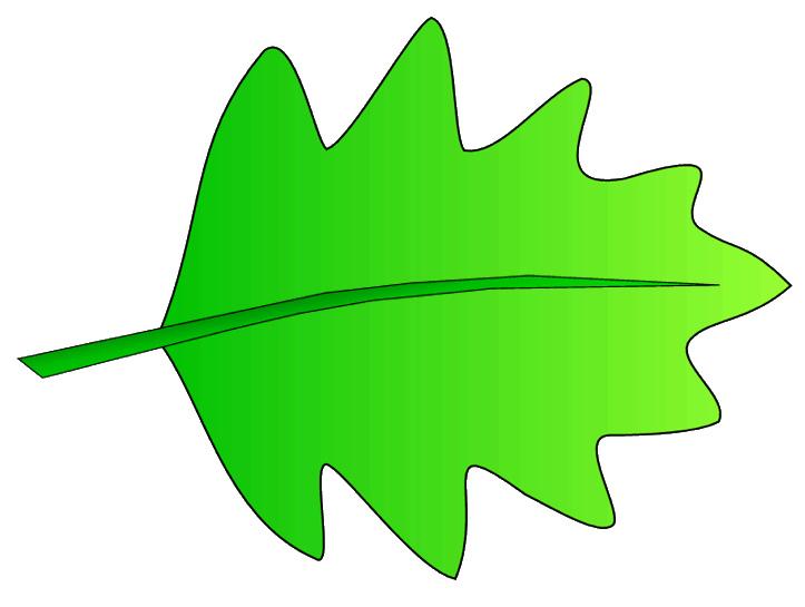 green leaf 3 sketch clipart, lge 12 cm long.