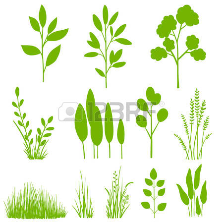 7,080 Long Leaves Stock Vector Illustration And Royalty Free Long.