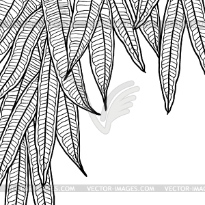 natural background with long leaves.