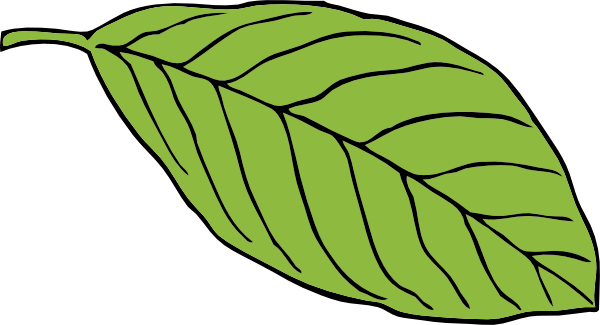 Oval Leaf Clip Art at Clker.com.