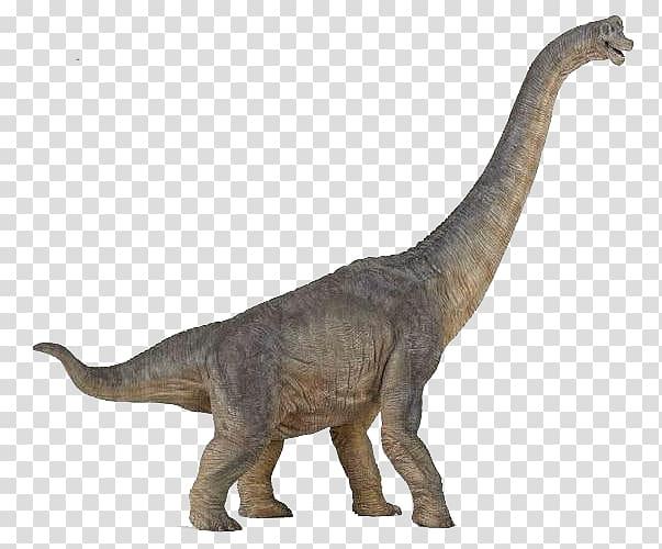 Brachiosaurus Tyrannosaurus Dinosaur Morrison Formation.