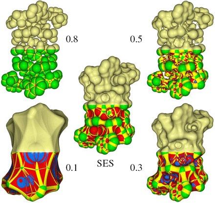 Ray casting molecular surfaces of Gramicidin A (1GRM): SES.