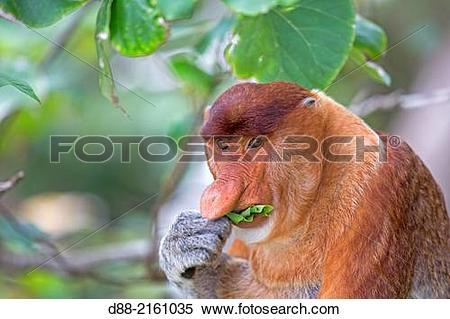 Stock Image of Asia,Borneo,Malaysia,Sarawak,Bako National Park.