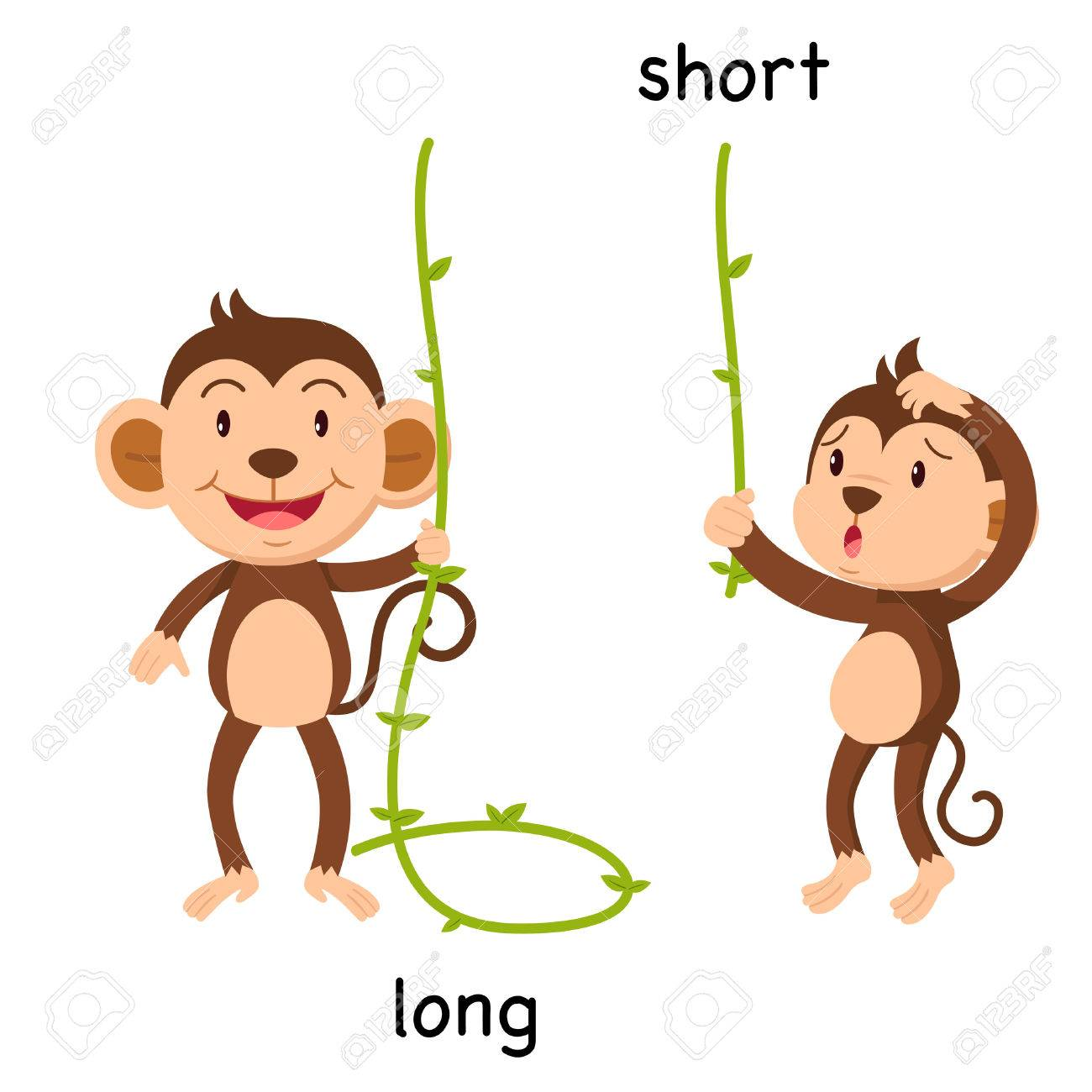 Opposite long and short vector illustration.
