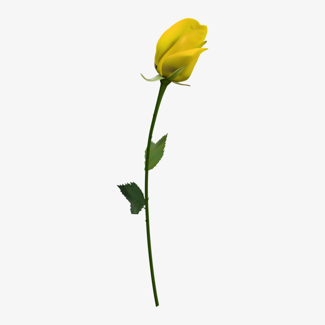 A Yellow Rose, Rose Vector, Rose Clipart #445472.