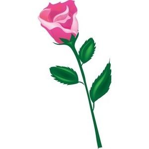 Long Stem Rose Clipart.