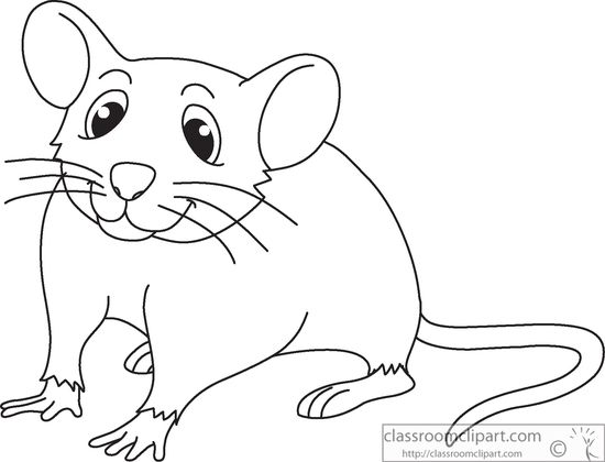 Animals : mouse.