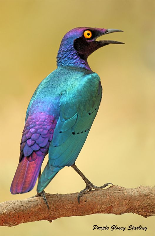 1000+ ideas about Colorful Birds on Pinterest.