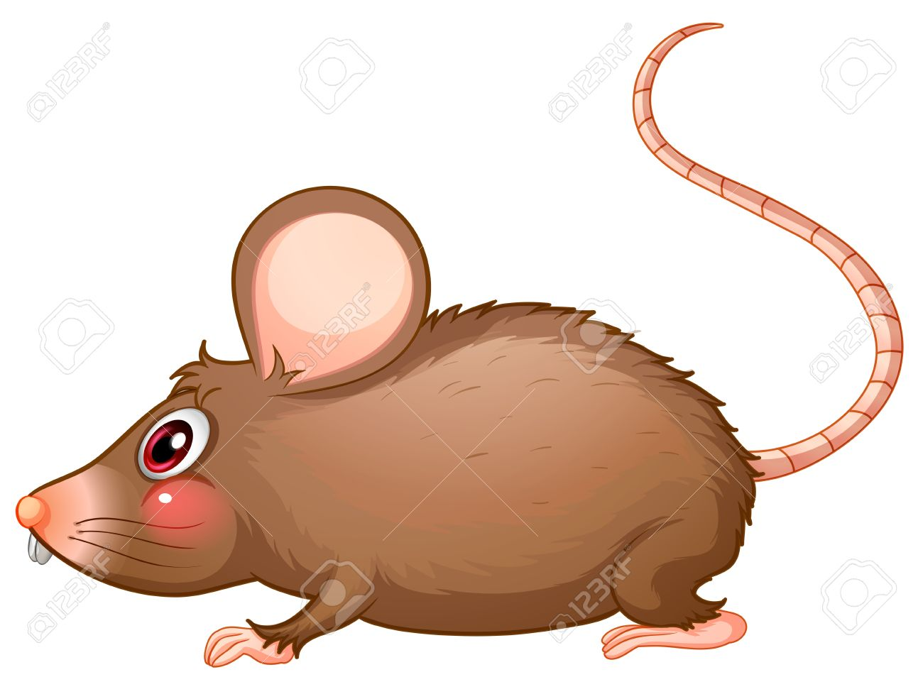 Illustration Of A Rat With A Long Tail On A White Background.