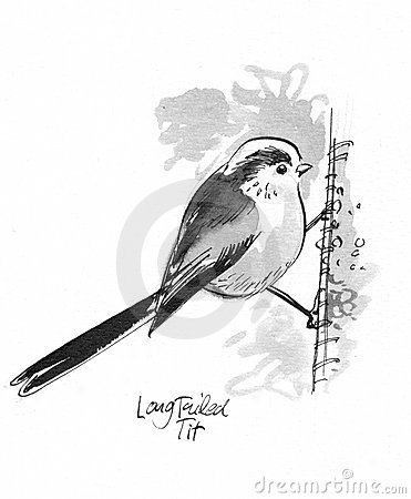 Long Tailed Tit Illustration Stock Images.