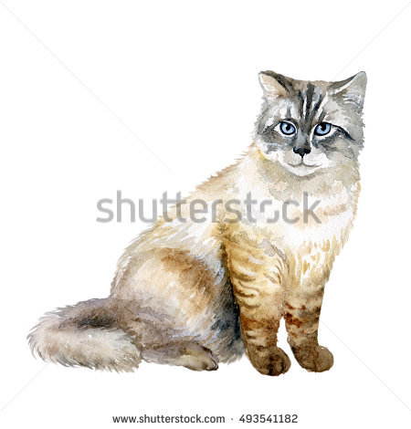 Longhaired Stock Photos, Royalty.