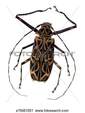 Longhorn beetle clipart #12