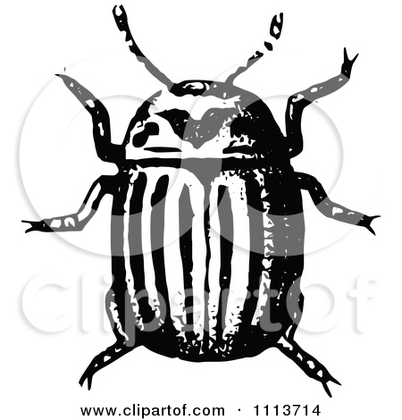 Longhorn Beetle Clipart Clipground