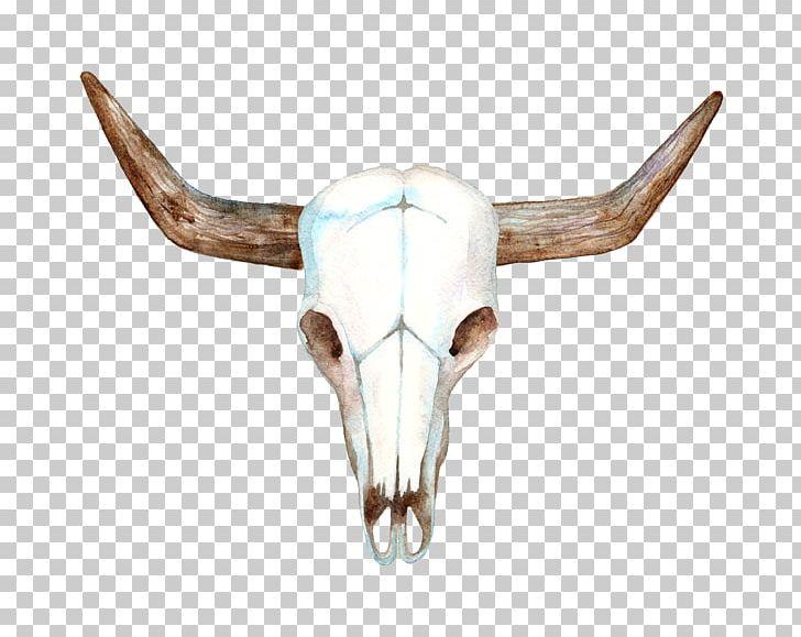 Texas Longhorn Cows Skull: Red PNG, Clipart, Antler, Bone.