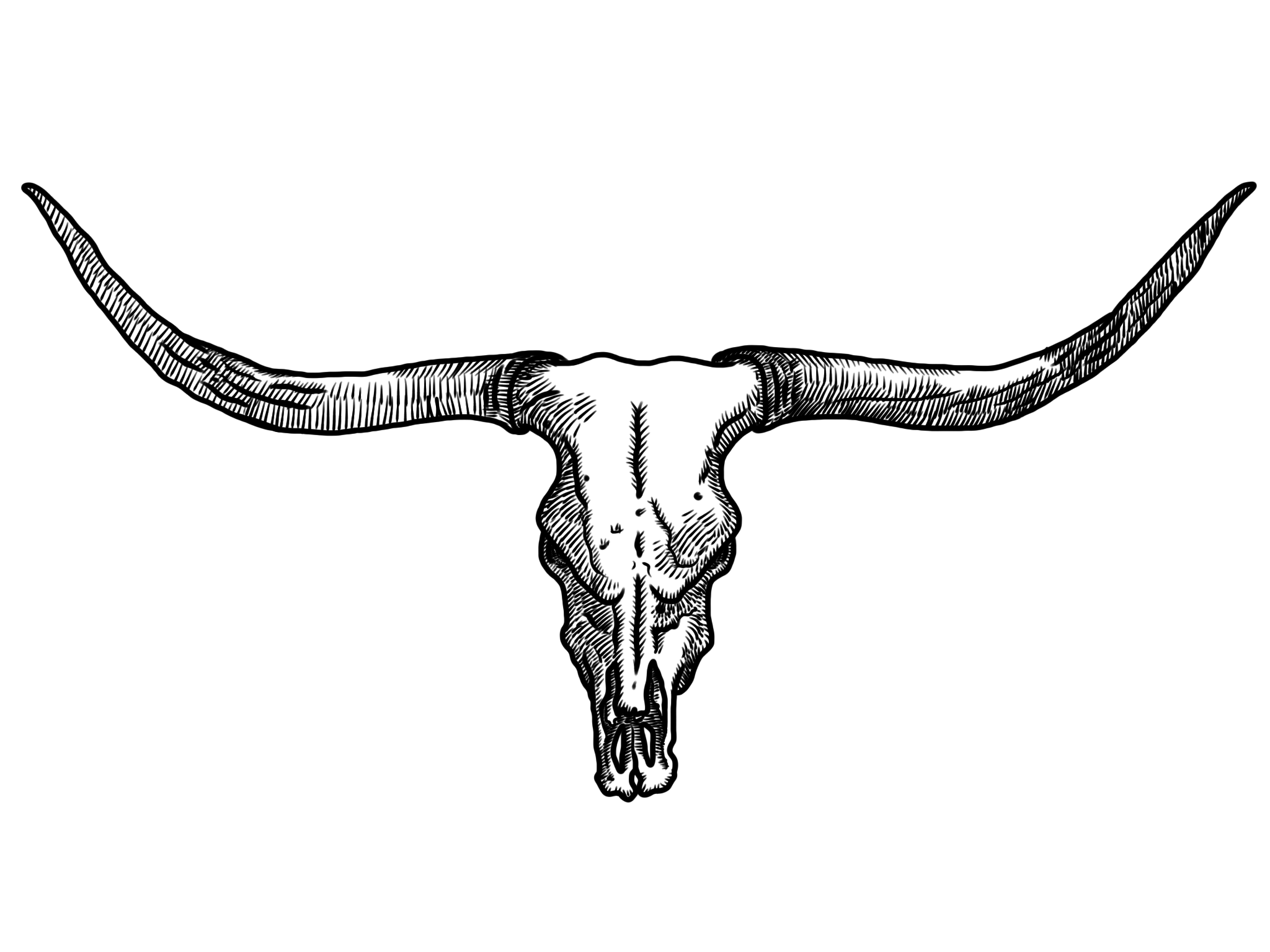 Bovine,Texas longhorn,Horn,Bull,Black.