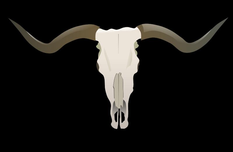 Free Clipart: Longhorn Skull.