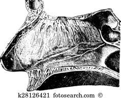 Longitudinal section Clip Art Illustrations. 50 longitudinal.