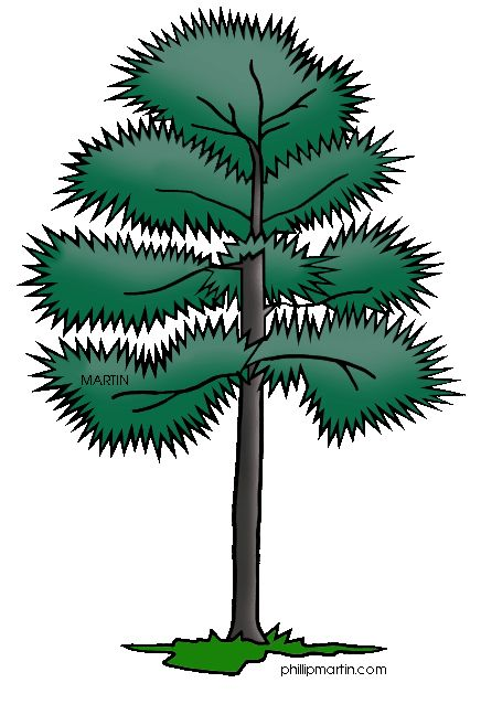 Long Leaf Clipart.