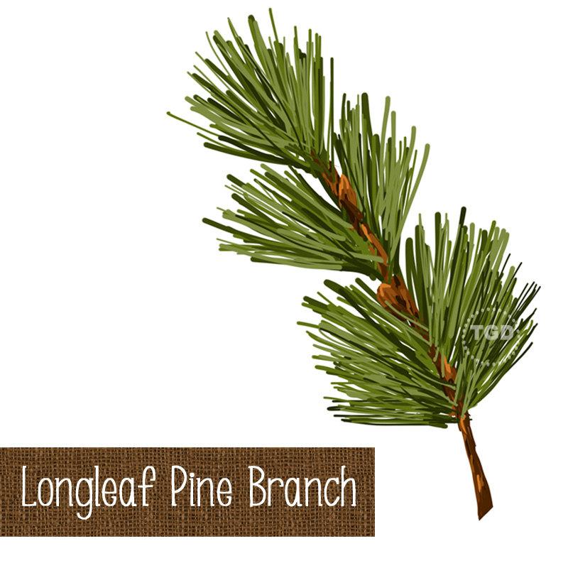 Longleaf Pine Needle Clip Art.